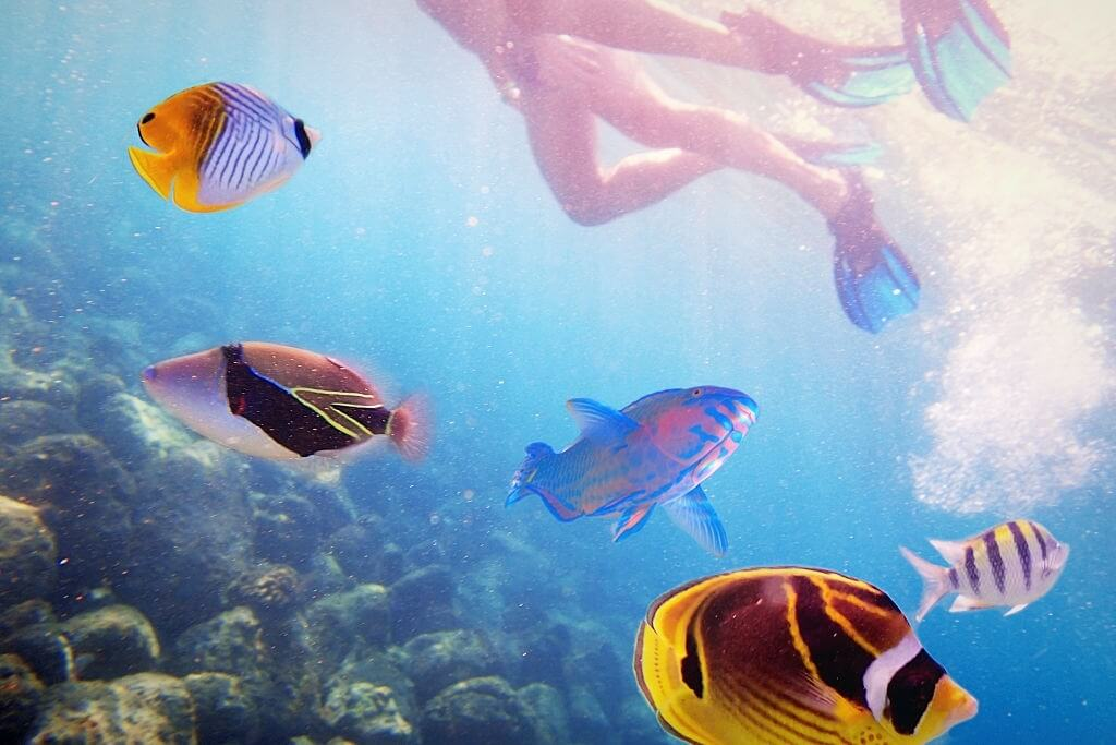 What is the Best Time to Visit Kauai for Snorkeling?