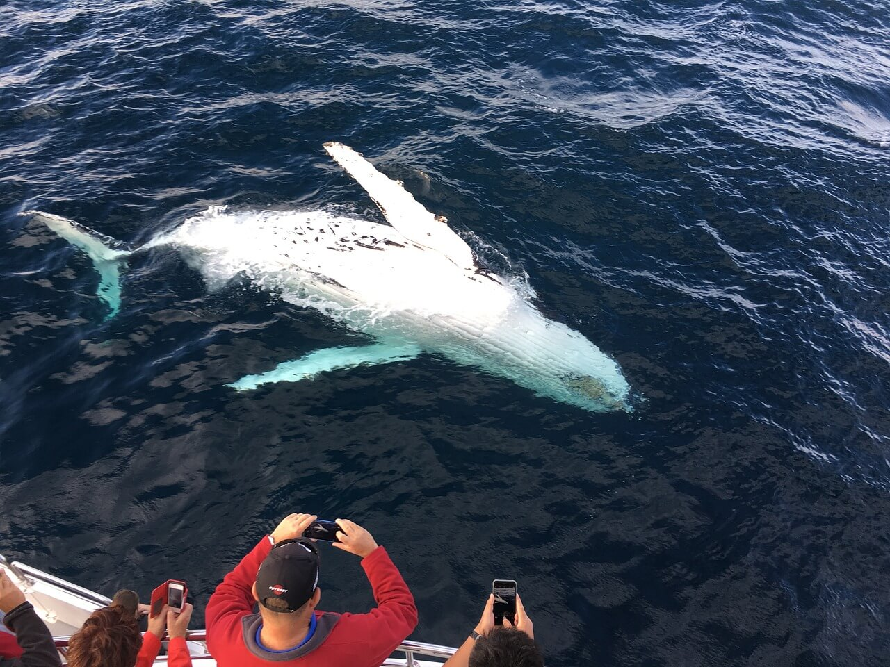 Best Time to Visit Iceland for Whale Watching
