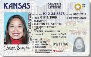Can You Find Driver License Number by Using Your SSN Online (Social Security Number)?